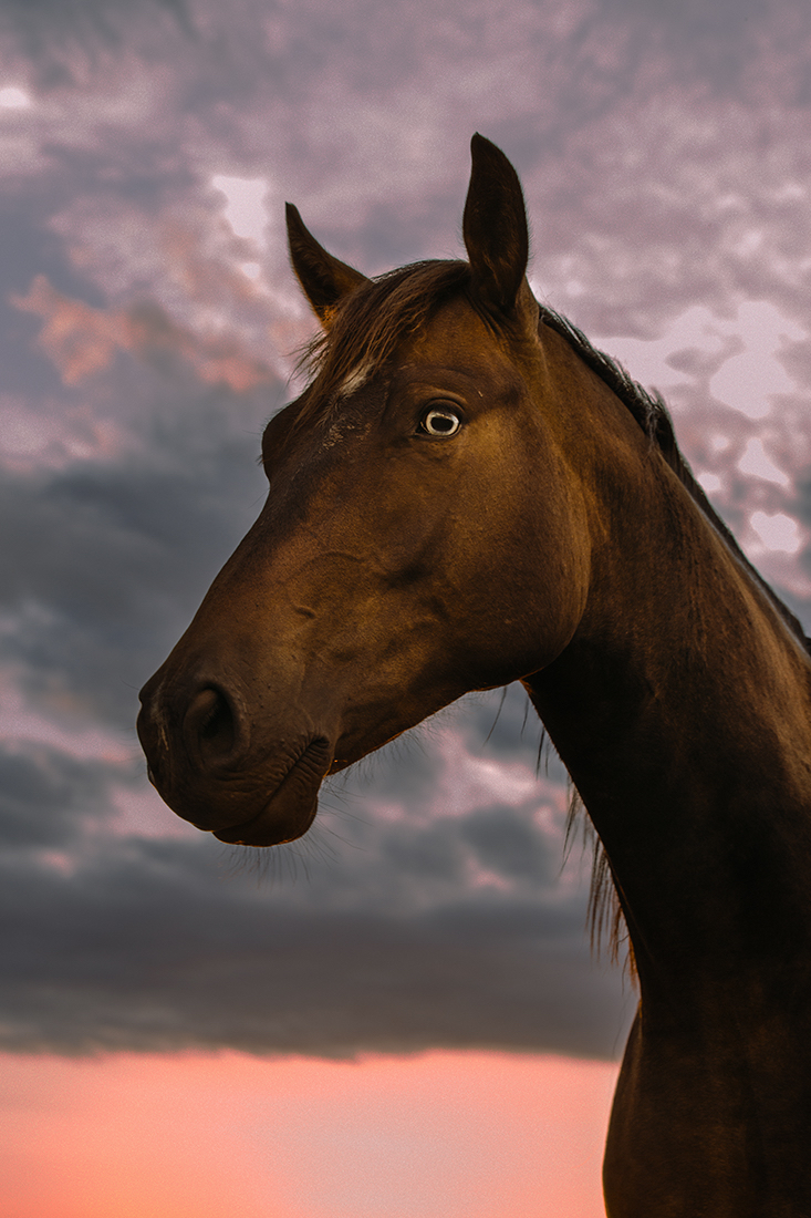 Young Gangs - Horse4A